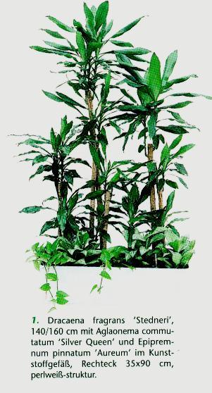 Hydrokultur pflanzen hydrokultur pflanzen im kulturtopf for Hydrokultur design